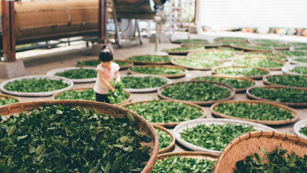 教你如何看出『受潮茶葉』!怎麼挽救受潮茶葉!|買茶葉最推薦「無可挑Tea」