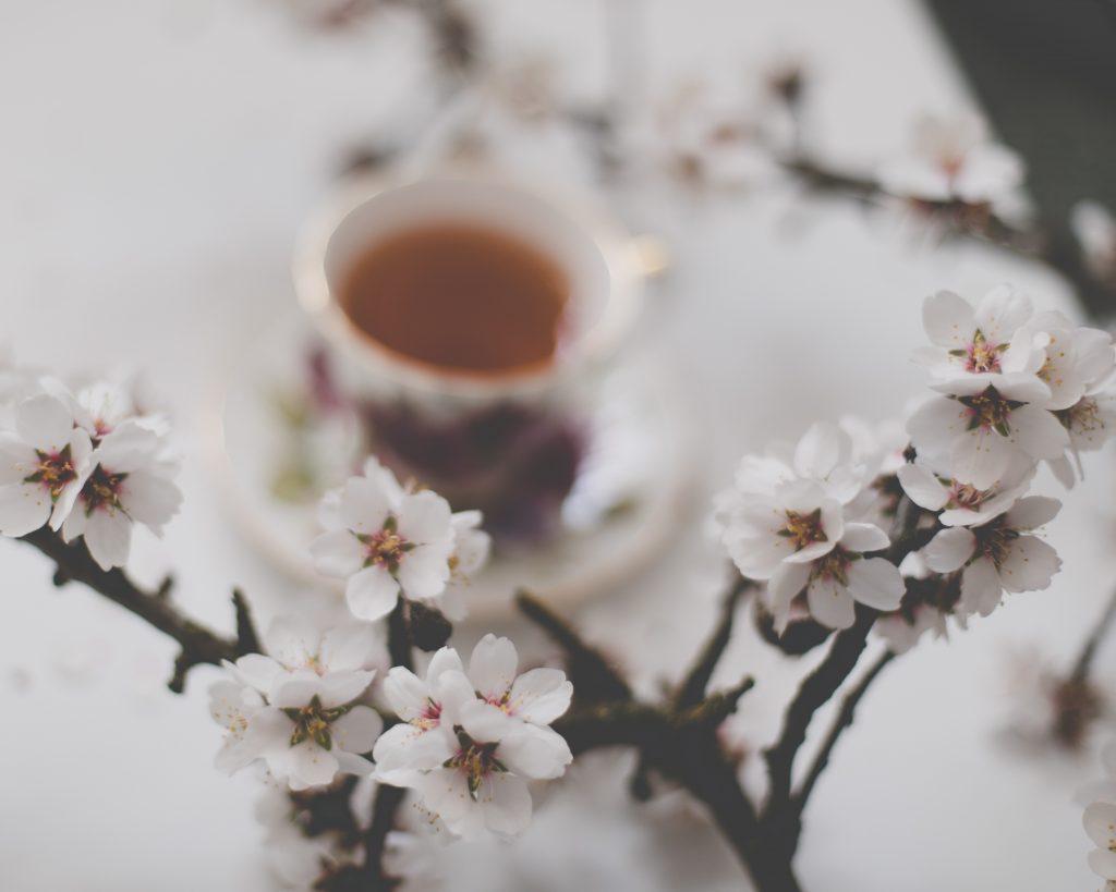 5款養生花茶介紹|養生花茶功效|買茶葉推薦無可挑Tea