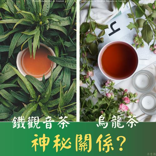 鐵觀音茶與烏龍茶的神祕關係|鐵觀音茶的介紹|無可挑Tea